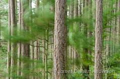 Windy Day at Washington Park (jamesdelbertanderson) Tags: anacortes washingtonpark fidalgoisland wind windy pnw nature washington forest