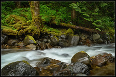 Rainy Day On The Creek (Ernie Misner) Tags: skatecreek ashfordwa creek forest washington erniemisner lightroom nik capturenx2 f8andbethere