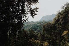Huasteca Potosina (lejardindevenus) Tags: méxico huastecapotosina xilitla laspozas méxicodesconocido visitmexico