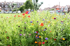 Village Green Wild Flower Display (tiger289 (The d'Arcy dog supporters club)) Tags: eastpreston westsussex villagegreen dogs penangvillagerestaurant flowers trees beach waves breakwaters sea searoad sealane heraldry architecture clockhouse clocktower plaques villagelife cars boules fairground villagefestival park greenbelt plant tree landscape woods outdoor garden estate flowerbeds wildflowers