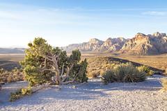 Juniper View (Joel Quimpo) Tags: red rock rockformations lasvegas mountains