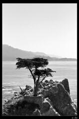 Lone Cypress B&W (eba_FR) Tags: eba nikon d90 california pebble beach