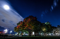 MIT Foliage (TomBerrigan) Tags: mit massachusetts institute technology mass boston cambridge foliage