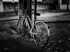 Tambin son para el otoo (Luicabe) Tags: airelibre bicicleta blancoynegro cabello enazamorado exterior luicabe luis monocromtico naturaleza vehculo yarat1 zamora ngc monocromtico vehculo