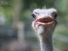 Clear eyes (Magic life gallery) Tags: barranquilla atlntico colombia co avestruz ostrich carlosbustamante carlosbustamanterestrepo carlosbustamantecartagena zoo zoolgico