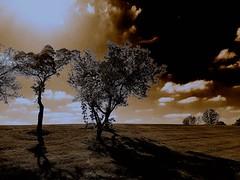 Sun and shadow... (Rupam Das) Tags: sun shadow field open outdoor silhouette tree outline sepia cloud horizon