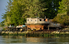 Beached Houseboat on Strawberry Island in Tofino (spetersonphotography) Tags: tofino westcoast westcoastvancouverisland tourists longbeach pacificrim pacificrimnationalparkreserve fishing fishboats inlet water pacificocean ocean docks wharves oldboats storms birdwatching sailboats tofinoair strawberryisland strawberryislandcommunity floathomes floatinghomes tofinoharbour tofinoinlet clayoquotsound floats buoys britishcolumbia canada nature nikond5200 nikon 2016 theinnattoughcity icehouseoysterbar