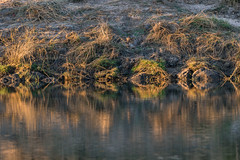 20160825_ZambeziReflectionsLandscapes_MCM-2 (mcmessner) Tags: abstract africa bjadventures morning morningboatride reflection rorschak southafrica2016 sunrise tongabezilodge zambeziriver zambia livinstone