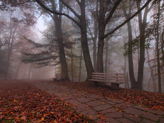 The Path To Grandview (Bill Fultz) Tags: autumn fall westvirginia grandview benches pathway newrivergorge parkbenches almostheaven foggytrees foggyforest newrivergorgenationalriver westvirginiafall