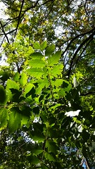 Lightning game (cyrielle.photography) Tags: park trees light tree nature beautiful beauty forest landscape leaf woods colorful branch natural branches magic lightning leafs
