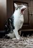 cat 20 (martijn1987) Tags: bestofcats