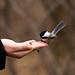 Bird in hand 2