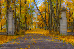 Ancient Gate (AudioClassic) Tags: road park old autumn winter red orange sunlight white plant black tree green fall nature leaves yellow misty stone mystery architecture season landscape outdoors gold golden leaf woods october gate tallinn estonia scene illuminated backgrounds environment mapletree multicolored sunbeam autumnal vibrantcolor colorimage famousplace autumntree deciduoustree autumnforest kadriorgpalace autumnlandscape autumnglory beautifulautumn ancientgate foliag tallinncity