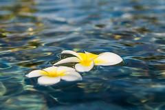 Floating Away (Lee532) Tags: flower water pool petals nikon floating nikkor 2470mm d610