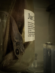 Jar 2 (DanRSmith) Tags: fish brighton jar pickled boothmuseumofnaturalhistory olympus17mmf28 olympusepl5
