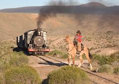 Esquel branch of General Roca Railway, La Trochita -  Esquel, Argentina (dayvmac) Tags: railway railroad argentina horse steamlocomotives esquelbranch latrochita patagonia gaucho steamtrain train