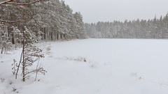 Snowy Lake Kolperinlampi (Nuuksio national park, Kolperinkangas, Vihti, 20150111) (RainoL) Tags: winter lake snow forest suomi finland geotagged nationalpark january v fin snowfall nuuksio uusimaa 2015 vihti vichtis nuuksionationalpark fz200 201501 lakesofnuuksio 20150111 geo:lat=6030081220 geo:lon=2447514787 kolperinlampi