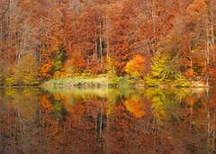 szimmetria / symmetry (debreczeniemoke) Tags: autumn lake forest landscape pond symmetry transylvania transilvania tó baiamare tájkép erdély ősz erdő nagybánya szimmetria bóditó canonpowershotsx20is fernezely