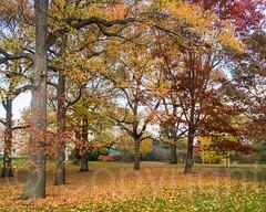 Foliage at the New York Botanical Garden, Bronx, New York City (jag9889) Tags: nyc newyorkcity autumn plants usa ny newyork fall colors garden landscape unitedstates bronx unitedstatesofamerica landmark foliage thebronx botanicalgarden nybg newyorkbotanicalgarden 2014 nationalhistoriclandmark bronxpark allamericacity jag9889 20141112