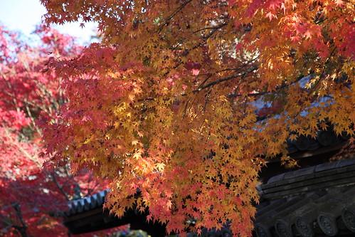 秋真っ盛りの南禅寺