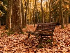 Autumn bank (David Cucaln) Tags: park city parque autumn trees fall leaves hojas arboles banco bank ciudad olympus arbres otoo parc ciutat tardor 2014 e510 fulles cucalon davidcucalon
