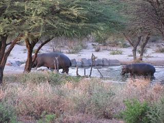 Botswana Hunting Safari 50