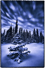 Blue Christmas (Wolfhorn) Tags: christmas blue snow nature alaska wilderness movingclouds