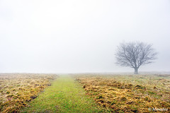 path with solitary tree (Mimadeo) Tags: road morning light sunlight mist tree nature wet grass rain misty fog way landscape countryside haze track mood path foggy nobody trail rainy lonely copyspace hazy solitary footpath pathway absence wetness soliltude