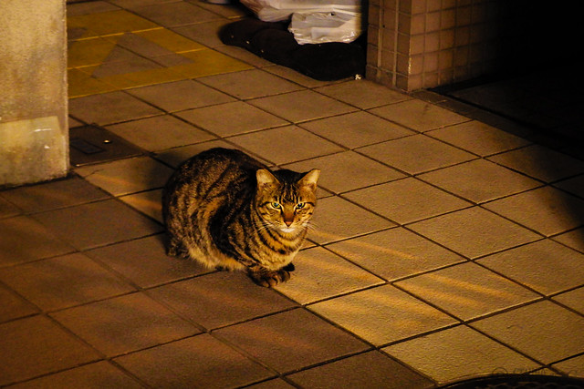 Today's Cat@2014-12-29