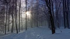 Donon (Jan 15) - 115_DxO-1 (sebwagner837_55) Tags: soleil alsace neige vosges donon