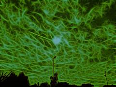 Van Gogh en Sonora (ix 2015) Tags: sky green sonora mxico mexico edited amarillo cielo editada vamgogh israfel67 ciudadobregn fractalius