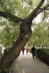 Trees Are Wonderful! ($ALEH) Tags: park people tree iran outdoor tehran