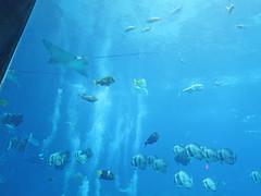 Fish Tank in Georgia Aquarium (soniaadammurray - SLOWLY TRYING TO CATCH UP) Tags: blue atlanta fish water georgia fishtank georgiaaquarium digitalphotography
