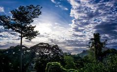 04-051616 (Jose Matt Kevin Nicolas Trinidad) Tags: blue sky sun tree up clouds sony philippines over exposed uplb nex5n