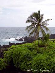 coast of Wai'anapanapa State Park, Maui (mirrorlessplanet.com) Tags: ocean statepark travel usa nature landscape hawaii maui waianapanapastatepark mirrorlessplanetcom