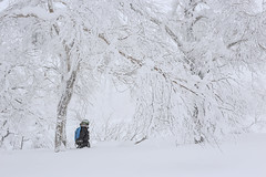 Winter Peace (robertdownie) Tags: trees winter white mountain snow mountains cold ice japan forest hokkaido peace tranquility powder calm wonderland