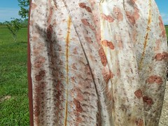 Etsy008 (6) (theresaknits) Tags: silk printing scarves dyeing eco