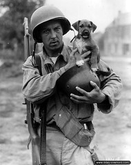 U.S. Army Pfc. Joseph E. Day holds a German helmet he has taken as a war trophy and a stray puppy he has adopted and named Invasion during the Battle of Normandy, France, June 1944. [2480x3127] #HistoryPorn #history #retro http://ift.tt/1TQqBYZ (Histolines) Tags: france history june puppy joseph army during us war day helmet taken battle retro german e stray timeline trophy he adopted normandy has invasion named 1944 holds pfc vinatage historyporn histolines 2480x3127 httpifttt1tqqbyz