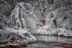 A heavy Load  P1040299 (BlueberryAsh) Tags: winter usa snow cold ice river frozen utah nikon moab nikond600