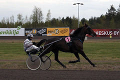 IMG_2650 (lovelymelancholy) Tags: horses horse hevoset hevonen horseraces ravit imrautio ravihevonen oulunravirata