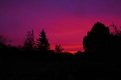 PA300719.jpg (paddy_86) Tags: sunrise treeline