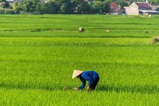 bac son - vietnam 25