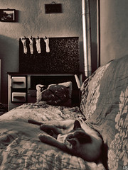 Cats Edition 7 - (31) (Robert Krstevski) Tags: sleeping pet pets cute animal animals socks sepia cat photography bed nap mood picture atmosphere sleepy frame napping cuteness cooker photooftheday robertkrstevski robertkrstevskiblogspotcom