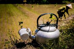 tea break (Igo Pieters) Tags: sun break rice tea working can pot heat mug teapot ricefield sawa risefield