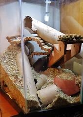 P1000073 (therovingeye) Tags: pets gerbil rodents gerbilhabitat