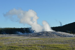 Old Faithful geyser, Yellowstone (David A's Photos) Tags: old june yellowstonenationalpark yellowstone geyser faithful yellowstonetrip ugb uppergeyserbasin june2016
