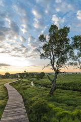 a new day (mattis.kieffer) Tags: sunrise landscape venn walimex hautes fagnes 14mm hohes sanyang rokinon