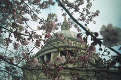 St Pauls in Spring, on film (Sarah-Louise Burns) Tags: city pink flowers london hope spring bright blossom stpauls future april beginnings blooming