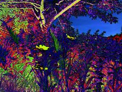 (psychedelic world) Tags: flowers tree grass leaves garden blossoms meadow wiese blumen psychedelic blätter garten baum blüten gräser psychedelisch wohltorf psychedelicworld