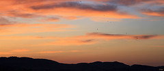 Sunset 2 (eleni m) Tags: sunset birds mountains outdoor sky clouds silhouette view nature quote ioniansea elenim orange blue black grey evening dusk